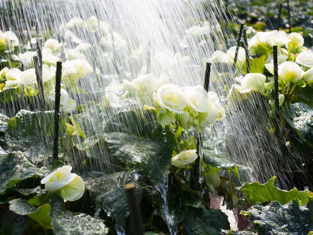 Irrigazione fiori