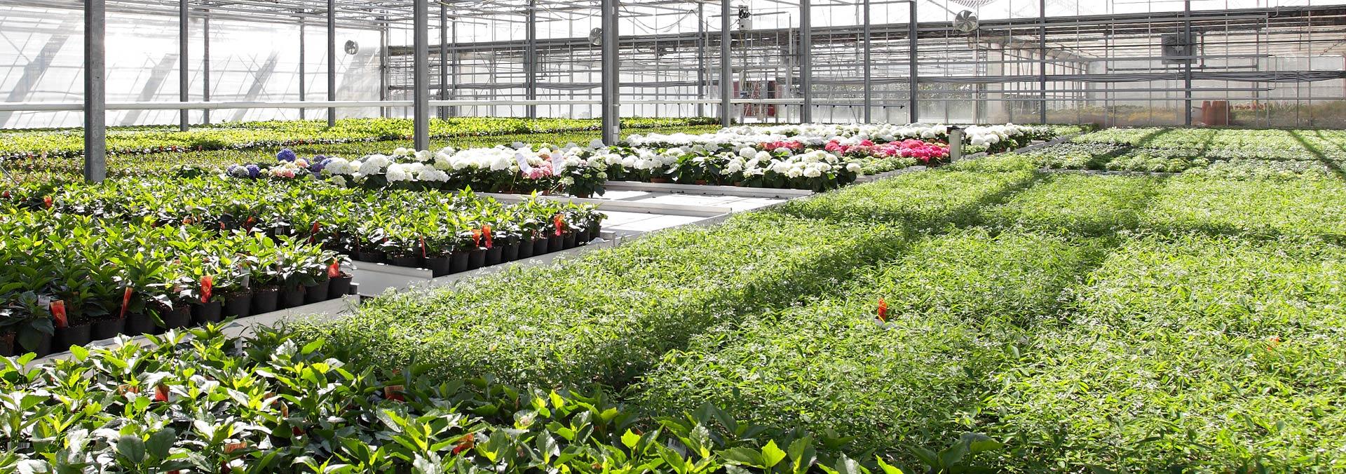 Produzione di fiori e piante ornamentali